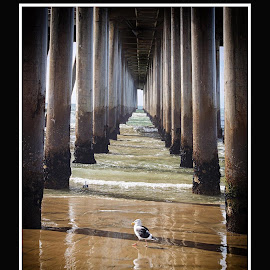Under the Pier by Jackie Stoner - Buildings & Architecture Bridges & Suspended Structures ( water, barnacles, seagull, green, sea, pier, ocean, beach, pillars )