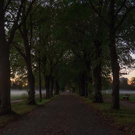 Night walk by Linda Sanchez-Greissel - Landscapes Prairies, Meadows & Fields ( green, trees, night )