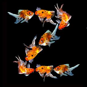 Goldfish Z by Janna Morrison - Typography Single Letters ( z )