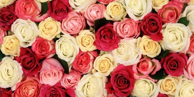 Flowers Roses Live Wallpaper - screenshot
