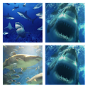 Great White Live Wallpaper icon