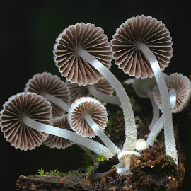 by Tan Seng - Nature Up Close Mushrooms & Fungi