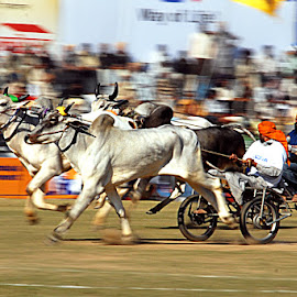 Race #9 by Rakesh Syal - News & Events Sports ( animals, people,  )