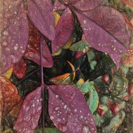 Berry Bush w/Raindrops by Allen Crenshaw - Digital Art Places ( bushes, digital art, flowers, garden, photography )