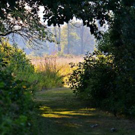 The light at the end of the path by Jill Beim - Landscapes Forests ( forests, nature, pathway, woodland, landscape,  )