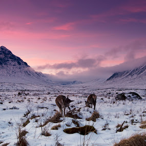 Kings House Hotel by Jackson Visser - Landscapes Mountains & Hills ( scotland, mountains, glencoe, pink sky, snow, glen etive, doe, kings house hotel, deer )