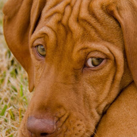 R.I.P Annie by Nancy Arehart - Animals - Dogs Puppies (  )