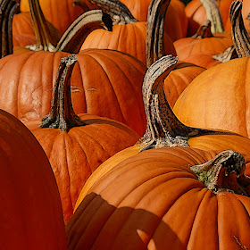P14-64RA Pumpkin Batch-PIXTO.jpg