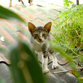 Stray Kitten on the Roof by Spano Liana - Animals - Cats Kittens ( cat, kitten, rooftop, stray )