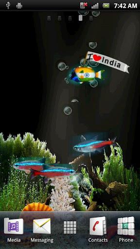 冒泡霓虹燈印度魚高清