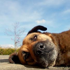 True friend by Ausra A. - Novices Only Pets ( pet, xoxo, dog, friend, saoirse,  )