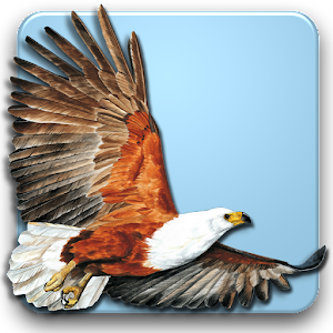 Roberts Multimedia Birds of SA For PC