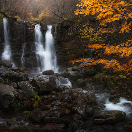 Dardagna falls by Luca Mondini - Landscapes Mountains & Hills ( water, streaming, stream, foggy day, leaves, landscape, colours, autumn, falls, fall, trees, rocks, dardagna falls,  )