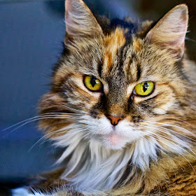 Portrait of Miss Libby.jpg