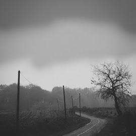 long way by Hatem Toumi - Landscapes Travel ( vasco, b&w, black and white, vscofilm, white, award, way, forest, road, travel, campagne, chemin, tree, route, roads, black, landscape )