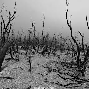 Death Forest by Ajjas Ravenant - Black & White Landscapes ( #blackandwhite #nikon #mountain #bw #landscape #indonesia #garut #papandayan )