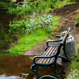 Bench @ Kerið, Southern Iceland.  by Hafsteinn Kröyer Eiðsson - Artistic Objects Furniture ( water, milk pot, bench, grass, green, plants, grímsnes, pealed paint, kerið, paint, clear, national park, iceland, submerged, brown, public, flowers, soil )