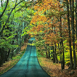The road to fall by Brent Morris - Transportation Roads