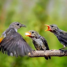 I shall come back by MazLoy Husada - Animals Birds