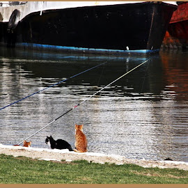 Fishing in the harbour  - Natalia Focshaner by Radu Focshaner - Animals - Cats Playing