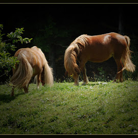 Horses by David Solodar - Animals Horses ( horses )