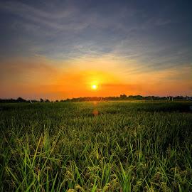 Sawah by Mursyid Alfa - Landscapes Prairies, Meadows & Fields