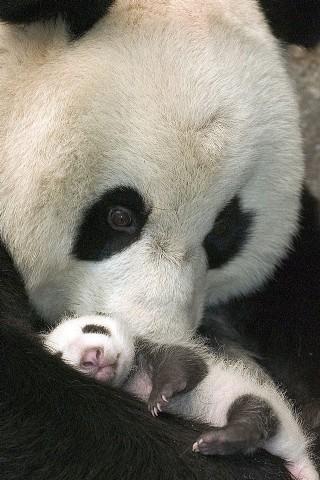 有趣的熊貓圖片我
