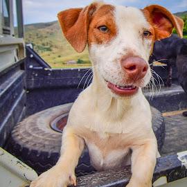 Farm Dog by Doornkop Photos Hein Van Niekerk - Animals - Dogs Portraits