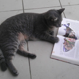 Micko by Ale Ra - Animals - Cats Portraits ( reading, cat, fish, book, humorous )