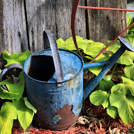 Blue Watering Can by Michael Lopes - Artistic Objects Antiques