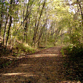 Light on Path in Forest by Kathy Rose Willis - Landscapes Forests ( natural light, illinois, nature, green, path, trees, forest, brown, woods,  )