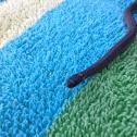 American Worm Snake