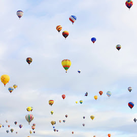 Balloons Everywhere by Charles Kuster - Transportation Other ( hot air balloon, sky, grass, balloon )