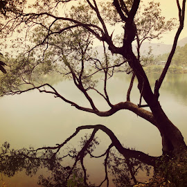 A game of shadows by Akhil Munjal - Nature Up Close Trees & Bushes ( water, tree, shadow, lake, evening )
