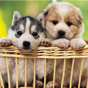 Cute Puppy Wallpapers Hd Apps On Google Play