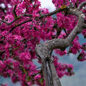 © Costel Ciobanu by Costel Ciobanu - Flowers Flower Gardens