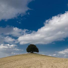 Tuscany by Špela Mohorič - Landscapes Prairies, Meadows & Fields