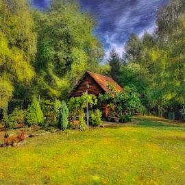 by Marina Đanić - Landscapes Forests