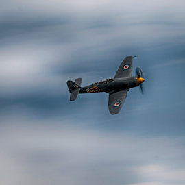 Sea Fury by Tommy  Cochrane - Transportation Airplanes ( fury, sea, raf, sea_fury )