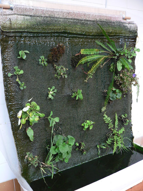 Como hacer un jard n vertical tipo patrick blank en tu - Como hacer un muro verde ...