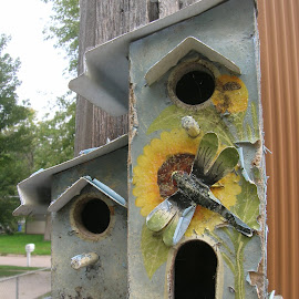 Dragon Fly Bird House by Linda McCormick - Nature Up Close Rock & Stone ( daisies and dragon fly, empty again, bird house, birds, dragon fly bird house )