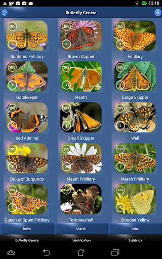 Butterfly Id - British Isles - screenshot