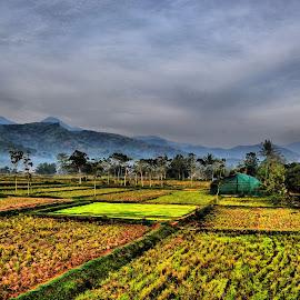 Rice Fields by Ranu Prayogo - Nature Up Close Gardens & Produce ( sky, mountain, hdr, rice fields, painting,  )