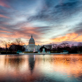Christmas Capitol Sunrise  by Kevin Miller - Buildings & Architecture Public & Historical ( dc, lights, washington, reflection, tree, christmas, sunrise, capitol, usa )