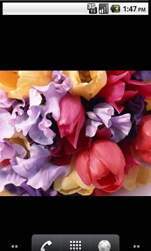 Flowers Amazing Photo Gallery