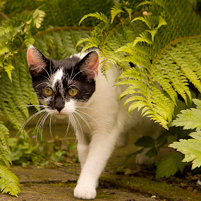 Bush Baby by Ron Jnr - Animals - Cats Kittens ( kitten, green, open space, green bracken, black and white kitten, first time out, white and black kitten, garden, #GARYFONGPETS, #SHOWUSYOURPETS )
