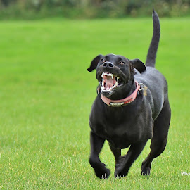 I'm smiling, honest. by Nigel Street - Animals - Dogs Running ( #GARYFONGPETS, #SHOWUSYOURPETS )