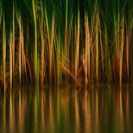 by Lori Kulik - Abstract Patterns ( abstract, water, grasses, grass, marsh )