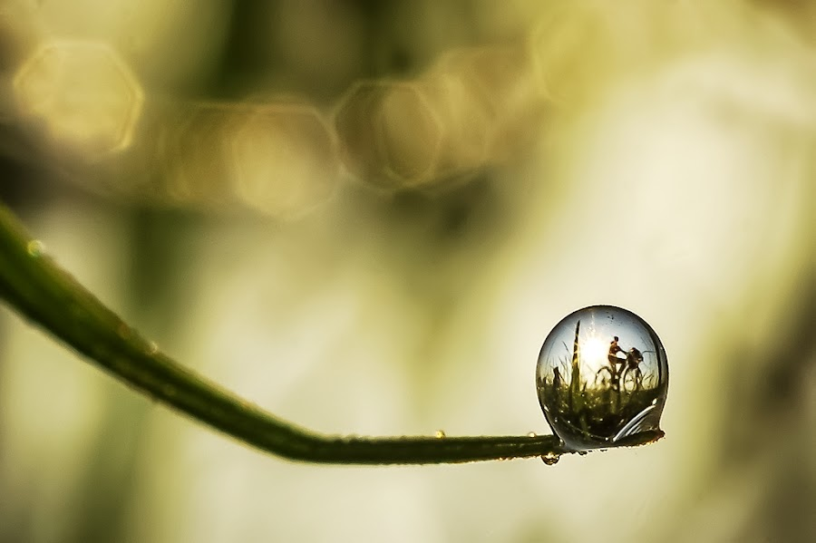 cycling in my dew by Kawan Santoso - Nature Up Close Natural Waterdrops (  )
