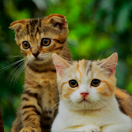 by Neni Wijaya - Animals - Cats Kittens